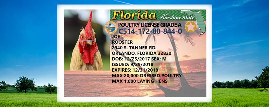 farmapp blog florida limited poultry license